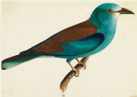 Wright, Wilhelm von: The European Roller. Fine Art Print/Poster. Sizes: A4/A3/A2/A1 (0060)